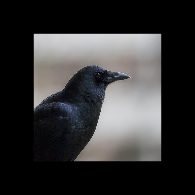 It's a crow!