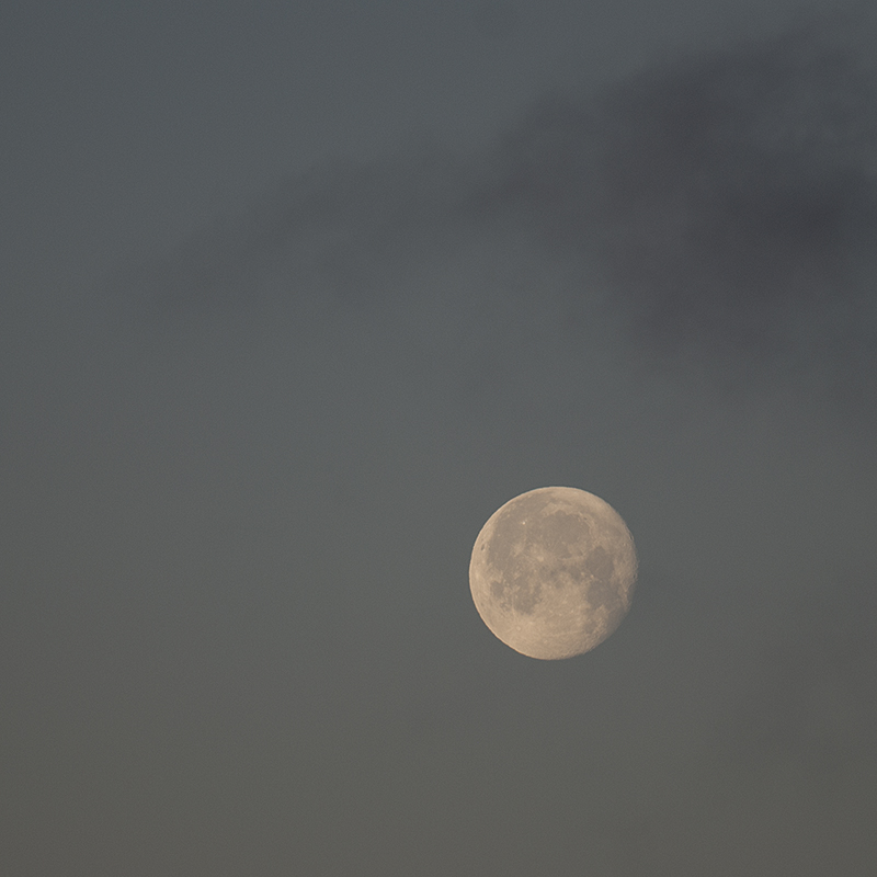 I hadn't seen the moon in a while, what with the nights being as overcast as the days, and all.