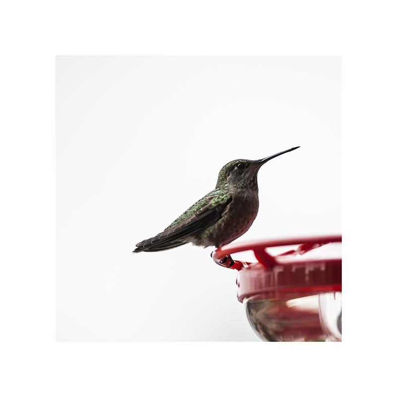 Don't peck me, hummingbird.